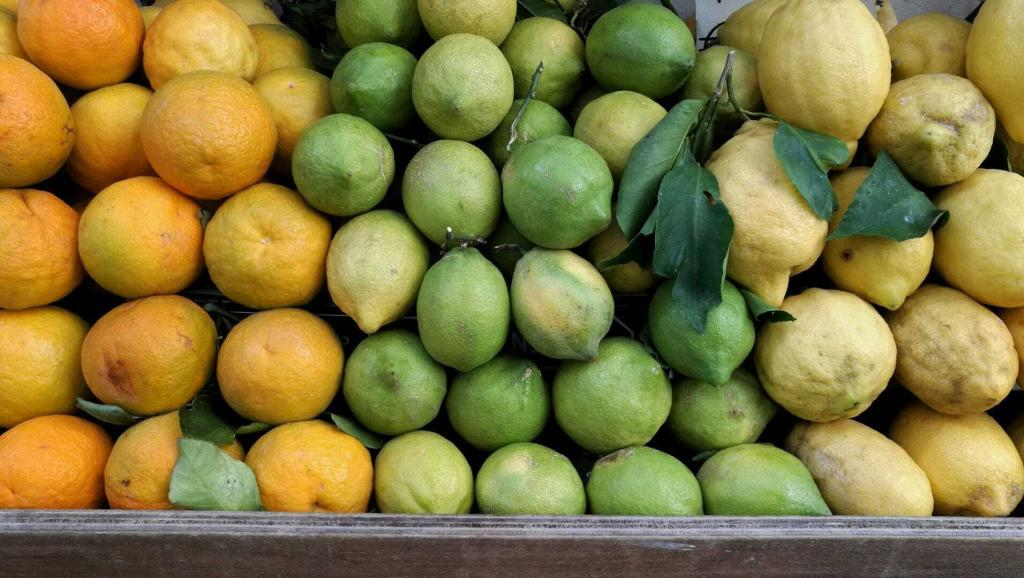 agrumi arance limoni sorrento