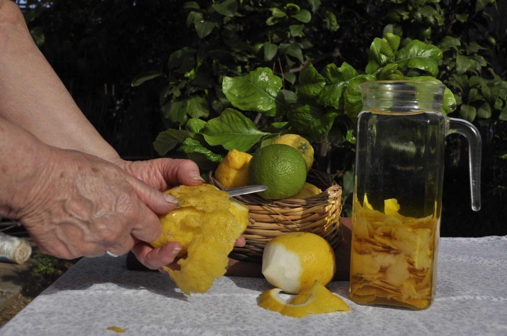 sorrento limoncello limoni